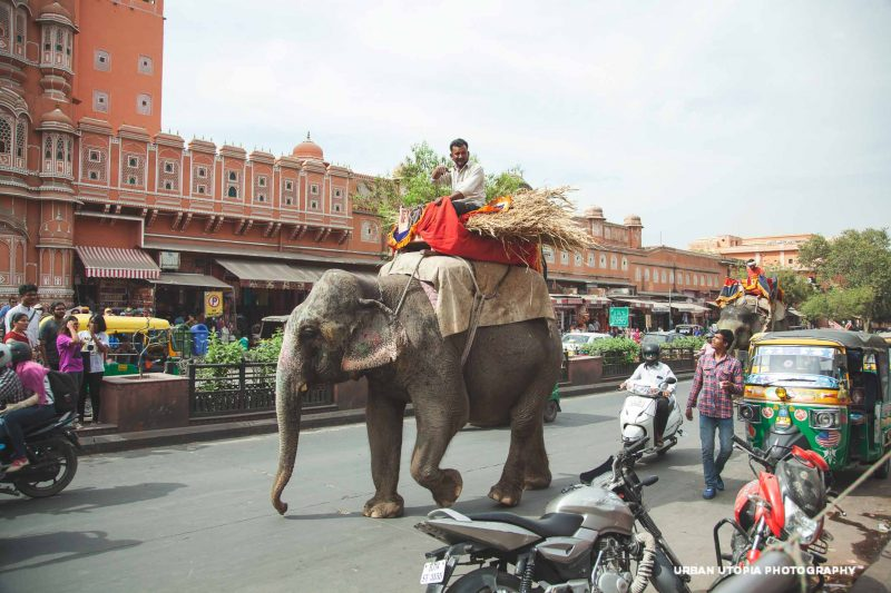 You never know what you'll see in Jaipur!